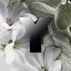 Yves Saint Laurent Y Eau De Parfum 100ml